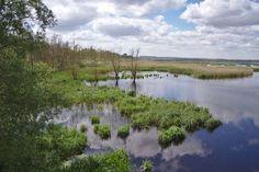 Naturschutzgebiet Große Rosin im Peenetal