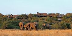 "Elephants at the Chyulu Hills Lodge Kenya ""ol Donyo Lodge"" by &Beyond. #Elephants #AfricanSafari  http://www.lecoresorts.com/st_hotel/chyulu-hills-lodge-kenya-ol-donyo-lodge/"