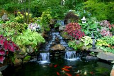 Waterfall-and-small-Koi-pond-e1382060860801.jpg (1100×733)