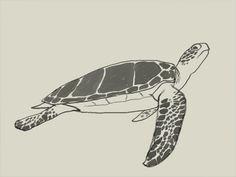 Hawaii Sea Turtles Cli...
