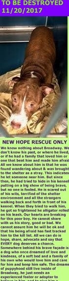 MURDERED 11/20/2017 --- Hello, my name is Broadway . My animal id is #12764. I am a male brown dog at the Manhattan Animal Care Center. The shelter thinks I am about 4 years old.  I came into the shelter as a stray on 16-Nov-2017. http://nycdogs.urgentpodr.org/broadway-12764/