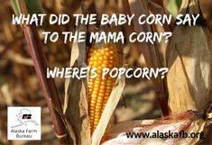 We just had to share this corny pun! Corny Puns, Farm Humor, Friday Humor, The Expanse, Alaska, Sayings, Life, Cheesy Puns, Lyrics