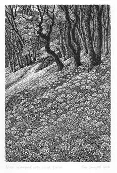 thewoodbetween:Wild Garlic Wood - Sue Scullard