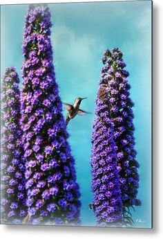 Hummingbird Metal Print by Hanny Heim.  All metal prints are professionally printed, packaged, and shipped within 3 - 4 business days and delivered ready-to-hang on your wall. Choose from multiple sizes and mounting options.