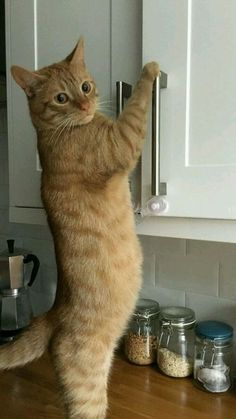 15 Cats Who Want To Lend A Helping Hand