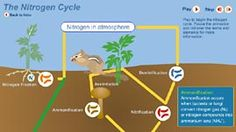 SCIENCE WK 4 The Nitrogen Cycle animation - Week 4