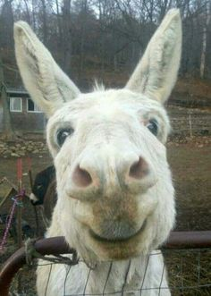 Sweetest donkey face ever! I want to kiss his nose!