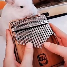 Geek Discover Hey loversthis Kalimba is absolutely amazing Absolutely wonderful instrument Pop up different melody Kalimba Instruments Cute Animals Animals And Pets Cool Things To Buy Stuff To Buy Funny Animal Videos Clever Inventions Cool Stuff Cute Funny Animals, Cute Baby Animals, Kalimba, Piano Music, Flute Sheet Music, Cool Things To Buy, Stuff To Buy, Animal Memes, Cool Gadgets