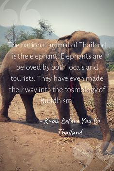 The book is designed to help newcomers to Thailand understand some things to expect National Animal Of Thailand, Asian Elephant, Culture Travel, Getting To Know, Buddhism, How To Become, Have Fun, Cultural Trips