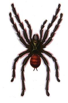 Les #mygales sont des #araignées de grandes tailles (de 3 cm à 10 cm) avec des poils. Elles ont très mauvaises réputation et alimentent les peurs des hommes. Elles vivent cachées dans les régions chaudes du globe. Lorsque vient la nuit, elles sortent de leur retraite pour chasser #numelyo #bestiaire