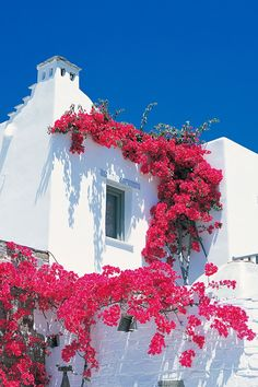 Bougainvillea on Yria hotel on Paros, one of the quieter Cyclades islands of the Greek Islands | Greece vacations