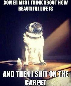 Beautiful Life funny memes animals dog puppy meme lol cute. humor funny animals