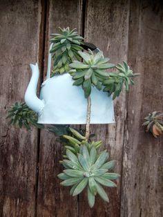 Succulents in a tea pot. Succulents In Containers, Container Flowers, Cacti And Succulents, Planting Succulents, Garden Deco, Garden Pots, Succulent Gardening, Container Gardening, Air Plants
