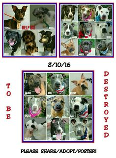 RED ALERT EVERYBODY 23 DOGS TO BE DESTROYED TOMARROW WED 8-10-16PLEASE SHARE NOW