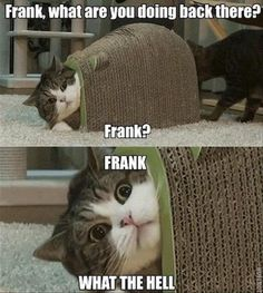 funny-animals-15-3 funny animal pictures pictures funny Animals