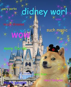 Doge goes to didney worl