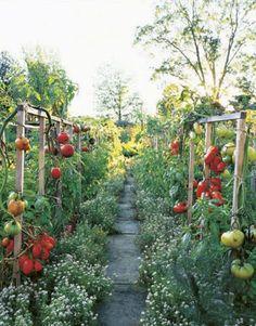 Great idea for a small vegetable garden