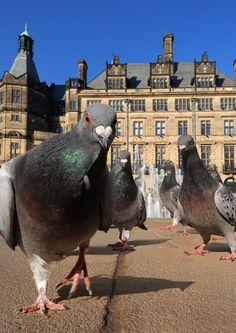 Pigeon perspective.