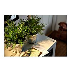 FEJKA Artificial potted plant - IKEA these look great - could go on your bookshelf and or desk