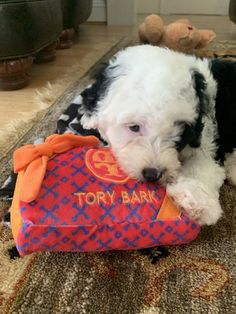 """Our new puppy loves it! She gets her very own Tory Bark like all of us! 😉"" - Gillian C. New Puppy, Puppy Love, Dog Boutique, Pet Products, Dog Toys, Cute Dogs, Diva, Plush, Puppies"