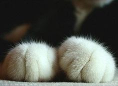 Fluffy cat toes