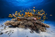 Photograph Marine life by Gaby Barathieu on 500px