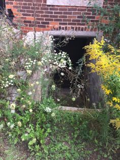 This is an entrance to a basement of an abandoned house
