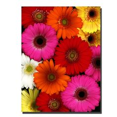 Flowers by Preston Photographic Print on Canvas