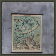 schoolkaart-vissen-mountains-more
