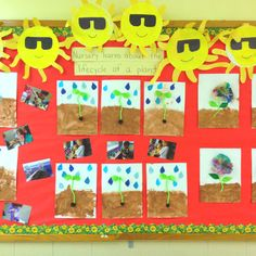 Plant life cycle bulletin board