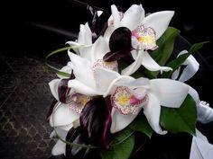 Cale negre cymbidium alb