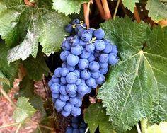 Vinhos portugueses premiados em concurso mundial