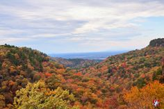 Josue Enriquez's image from atop Petit Jean Mountain. One of my favorite places on earth! Arkansas Camping, Petit Jean State Park, Camping Places, State Parks, Mountain, Earth, America, Fall, Awesome