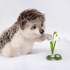 Cute Wallpaper Backgrounds, Cute Wallpapers, Bird Pictures, Cool Pictures, Birds Pics, Hedgehog For Sale, Funny Animals, Cute Animals, Felt Fox