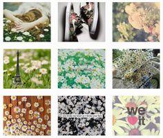白い花の組合わせ画像