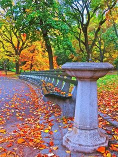 Autumn in Central Park, New York / Fall into Autumn