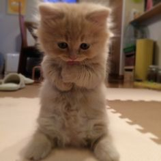 Baby Animals Super Cute, Cute Baby Cats, Cute Little Animals, Cute Cats And Kittens, Cute Funny Animals, I Love Cats, Kittens Cutest, Cute Dogs, Funny Kitties