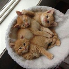 Little precious kittens...adorable ❤