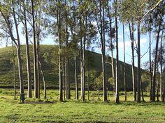 Bosque.Sul de minas,Brasil.