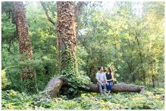 Engagement Portrait in Forrested Park Setting | engaged couple having pictures taken on a tree in Northern California