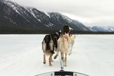 Dog Sledding in the Mountains by Jessica Cochran Photography | Two Bright Lights :: Blog