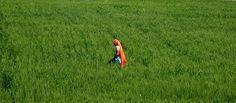 Bright field by joseluisrg.deviantart.com