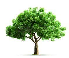 나무 - Google 검색