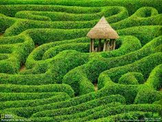 Laurel Maze - Glendurgan Garden - Cornwall, England