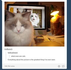 look at that cat in the back, its just sittin' there, staring at the lamp