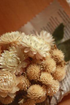 my garden Dry flowers