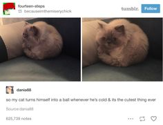 Funny Pictures Proving That Cats Are Just Purrfect Creatures 10 Cute Funny Animals, Cute Baby Animals, Funny Cute, Animals And Pets, Cute Cats, I Love Cats, Crazy Cats, Animal Memes, Cat Memes