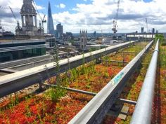 green roofs and facilities management Green Roof Benefits, Green Roof System, Urban Heat Island, Garage Roof, Living Roofs, Facility Management, Green Roofs, The Future Is Now, Roof Repair