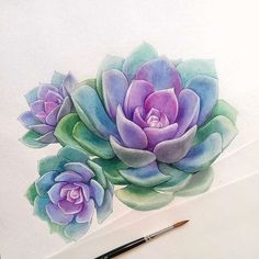 The squeezeable watercolor succulents of pretty much make my mouth water. 🍇🍇🍇She's got some really nice new paintings recently—give her feed a look. Although I think succulents probably taste gross. Succulents Drawing, Watercolor Succulents, Watercolor Flowers, Succulents Painting, Succulents Art, Drawing Flowers, Painting Flowers, Succulent Plants, Succulents Wallpaper