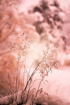 First Snowy Sunset SWEDEN   von Hanna Ravenwood
